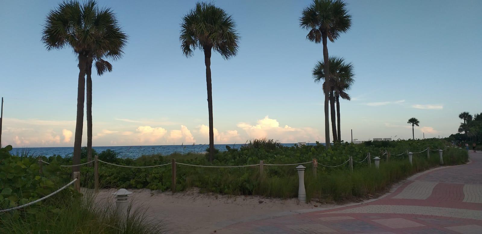 Blick auf Palmen und Meer in Cape Coral